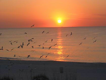 Vacation Rental Condo in Indian Rocks Beach, Florida, 5 Miles South of Clearwater Beach, West of Tampa Bay - Sunset and Seagulls